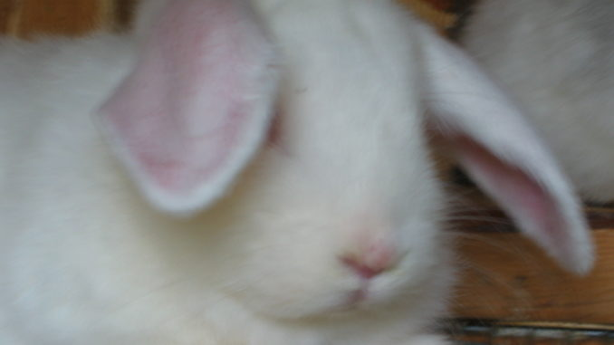 Bunnies are good.
